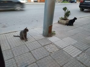 Fish restaurant cats